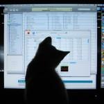 動画で愛猫をおもてなし!!ネコのためのYouTubeチャンネル「Videos for your Cat」
