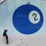 今週のYouTube話題動画:プールに画かれたトリックアートにネコが思わず3度見