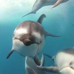 【動画】水中カメラがイルカの群れに遭遇!CGかと思うほどの美しさ