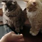 【動画】iPad×マジック: ハイテクマジシャンがネコも驚くiPad手品を披露