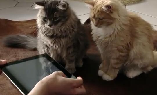 iPad手品をネコに披露