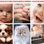 Facebookニュースフィードの「赤ちゃん写真」を「ネコ写真」にすり替えてくれるChrome拡張機能