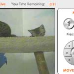 アニマルシェルターの猫たちとバーチャルに遊べるサイトが話題!「iPet Companion」