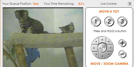 アニマルシェルターの猫たちと遊ぶ