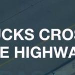 【動画】カモの親子が5車線のハイウェイ横断に挑戦!果たしてその結末は!?
