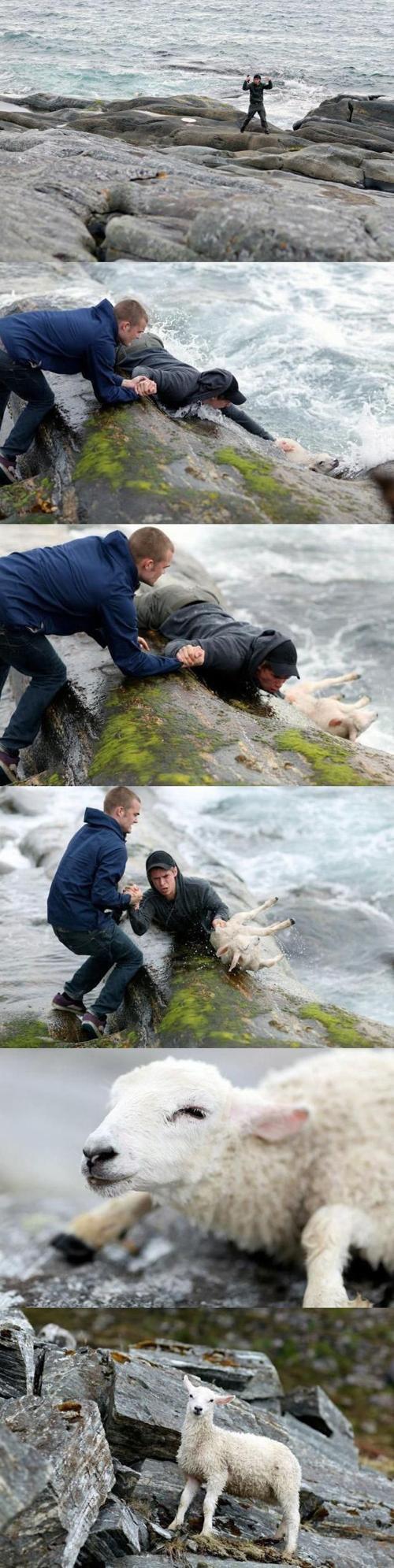 心温まる画像まとめ 海に落ちたヤギを救出