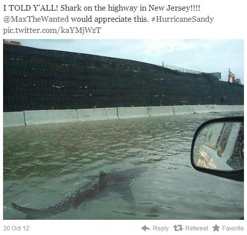 巨大ハリケーン「サンディ」 サメが出現?