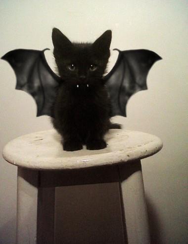 ハロウィンコスチューム 猫