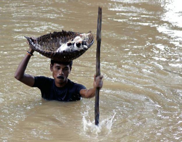 心温まる画像まとめ 洪水から子猫たちを救出
