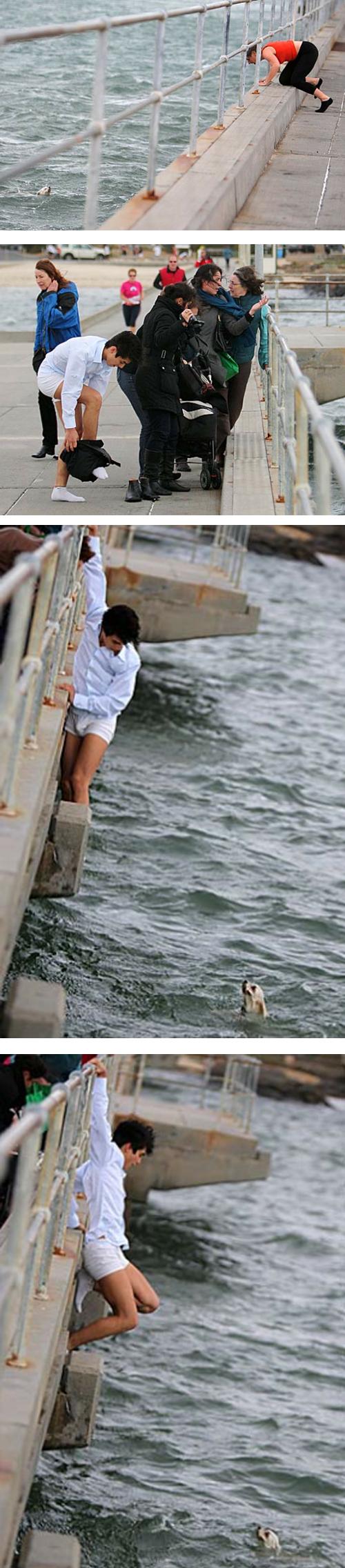 心温まる画像まとめ 見ず知らずの人の犬のために、海に飛び込む心優しき青年
