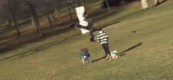 イヌワシが子供をさらう映像