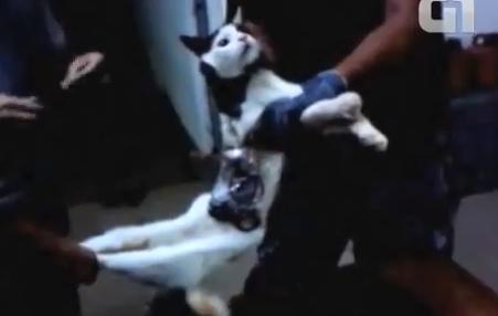 ブラジル刑務所に現れた運び屋猫