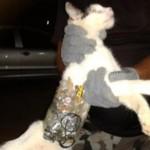 【運び屋キャット】ブラジル刑務所にノコギリやドリルを運び込もうとした猫が捕まる