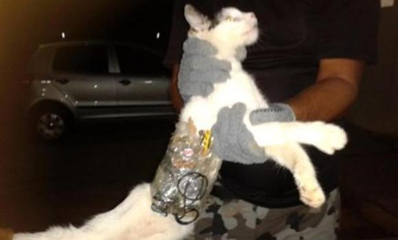 猫 運び屋
