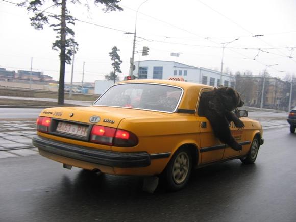 クマタクシー