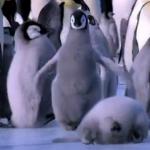 「ペンギン好き集まれ!」、ただただペンギンが転んだりすべったりする癒し動画