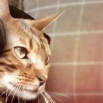 【エイプリルフール】ソニーが動物向けハイテク製品「Animalia」でペットガジェット市場に本格参入