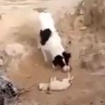 【動画】死んだ子犬を土に埋めようとする犬、動物にも死を悼む気持ちはあるのか?