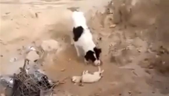 子犬を埋葬する犬