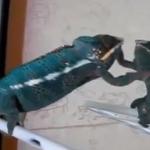 【動画】鏡の中の自分と必死で戦うかわいいペットたち