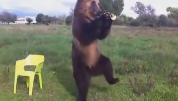ロシア 熊 トランペット