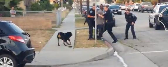 警察官が犬を射殺2