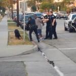 【動画】警察官が飼い主の前で犬を射殺、ショッキングな映像がYouTubeでバイラルに