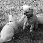 【動画】犬と猫の違い、久しぶりに飼い主と再会した時のリアクション