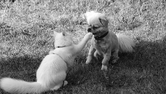 猫と犬の違い
