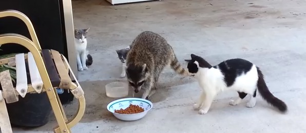 無力な猫たち