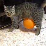 【動画】静電気で風船が体から離れなくなり悪戦苦闘する猫