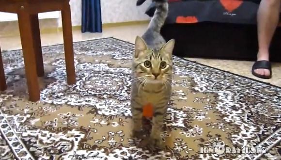 猫 風船 静電気2