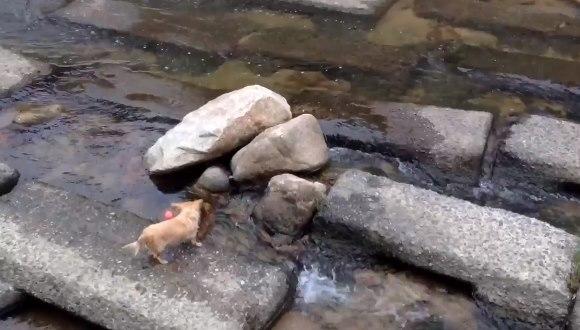ひとりボール遊び 子犬