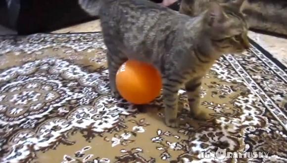 猫 静電気