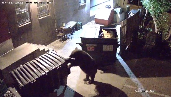 熊 ゴミ箱
