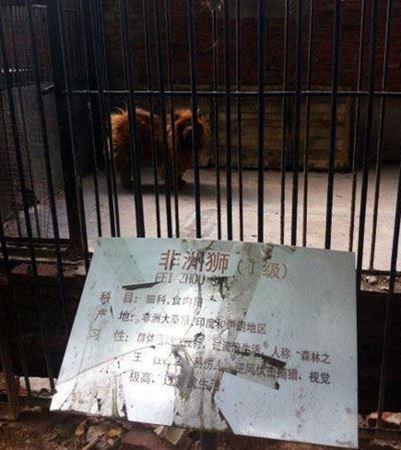 犬 ライオン 中国