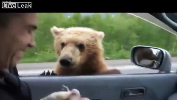 熊 餌 ロシア
