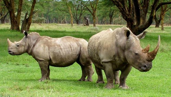 サイ密猟 南アフリカ