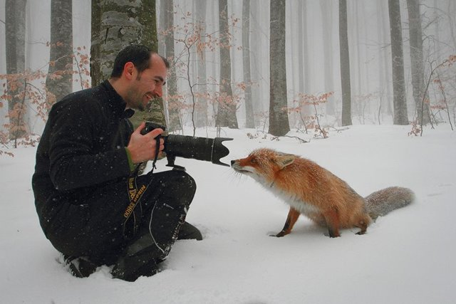 キツネ カメラ