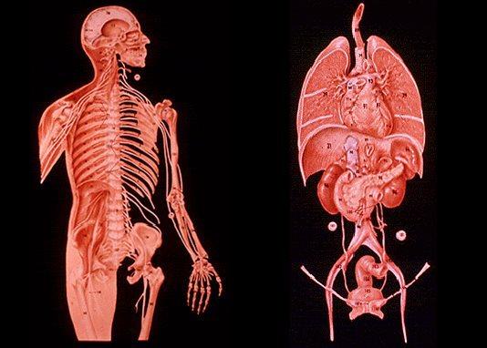 ボイジャー探査機のレコード盤 写真 人体1