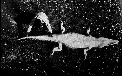 ボイジャー探査機のレコード盤 写真 生物3