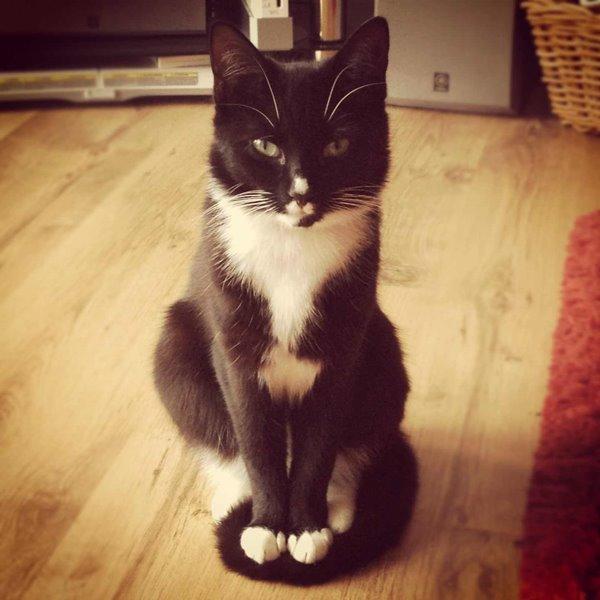 シッポに座る猫