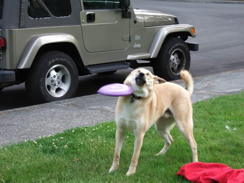 犬 フリスビー
