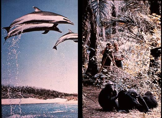 ボイジャー探査機のレコード盤 写真 生物2
