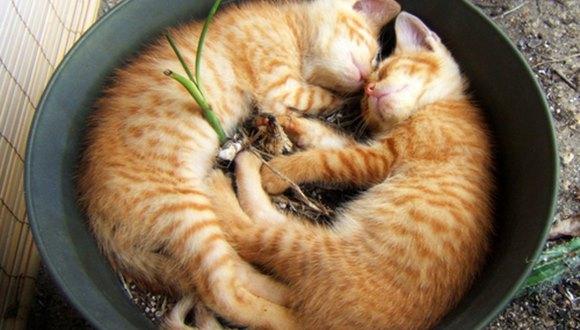 鉢植えで眠る猫