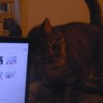 なんで猫ってヘッドバットしてくるの?