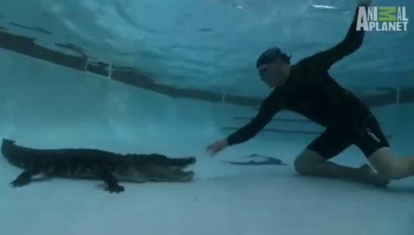 ワニをプールから追い出す方法