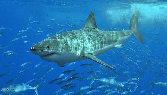 オーストラリア サメ ツイッター