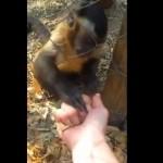 【動画】人間に何度も落ち葉を握りつぶさせようとする不思議なサル