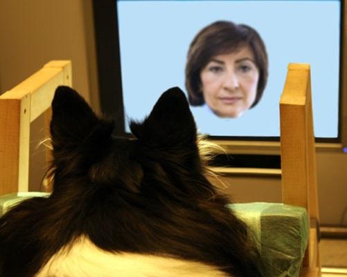 犬 顔認識